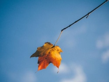 photo of leaf on twig with sky background