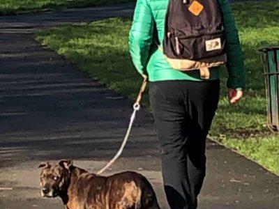 Jude walking Jude